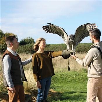 The Hawk Conservancy & Andover