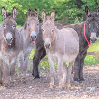 Sidmouth Donkey Sanctuary & Sidmouth
