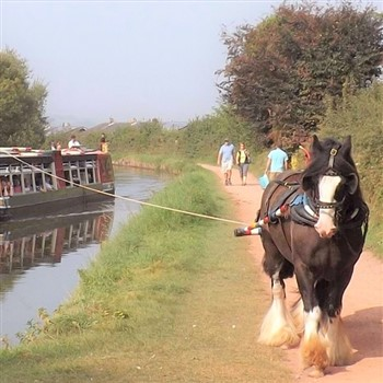 Tiverton Horse Drawn Barge & Exmouth
